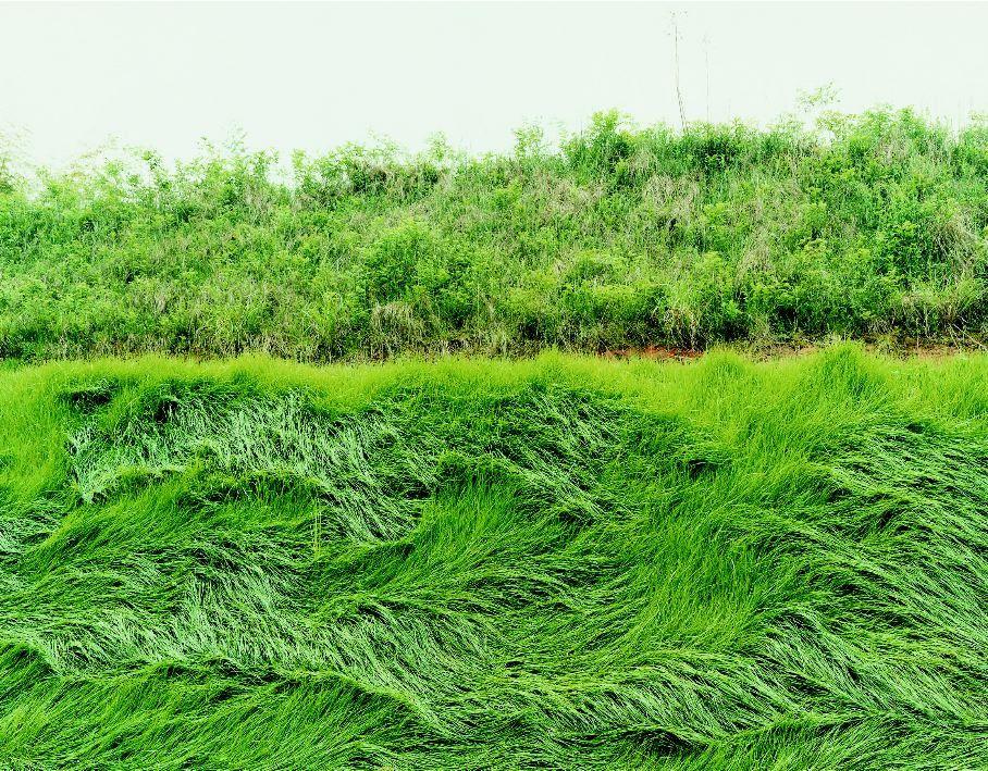 photo of grass by thomas fletchner
