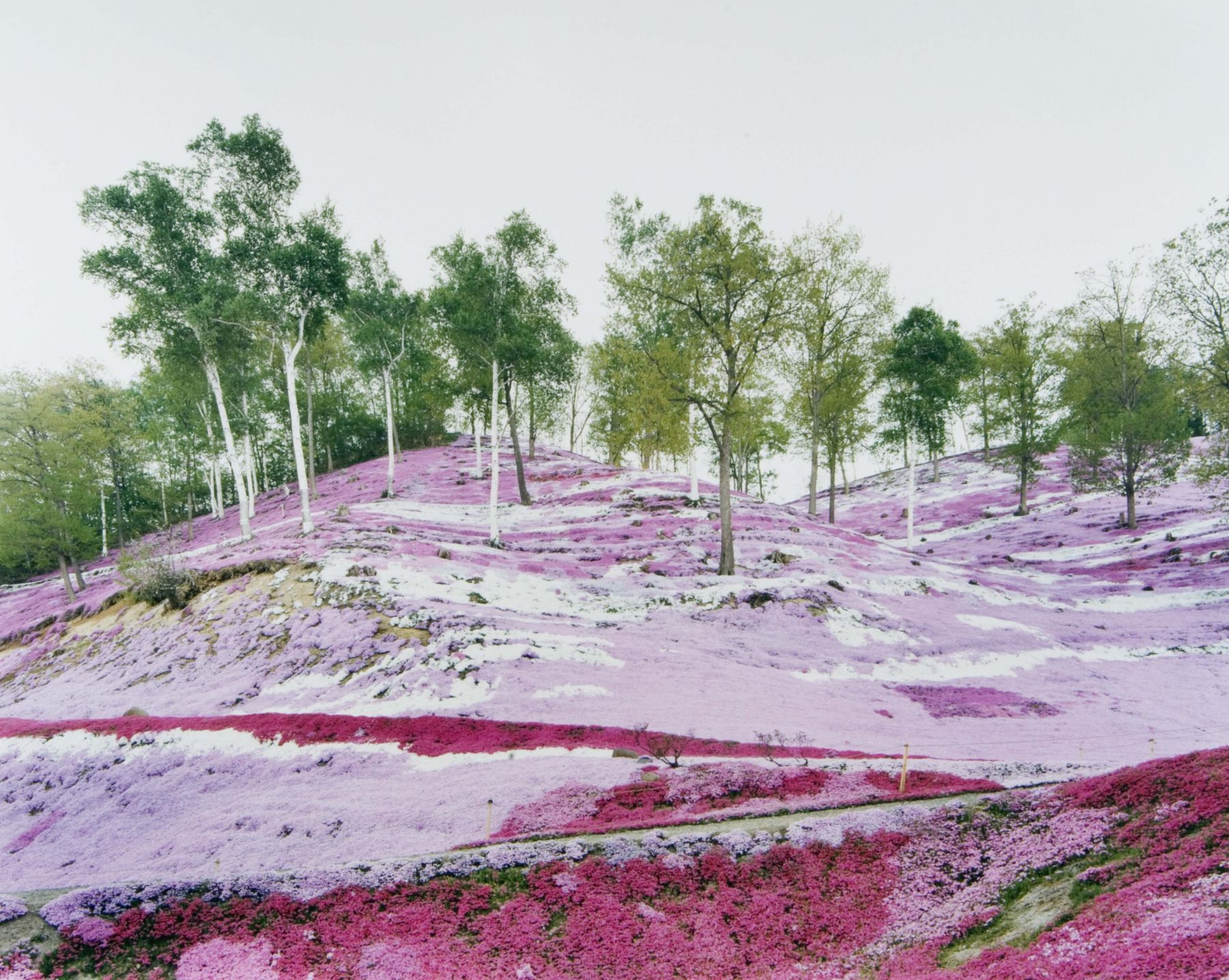 pink and green landscape by thomas fletchner