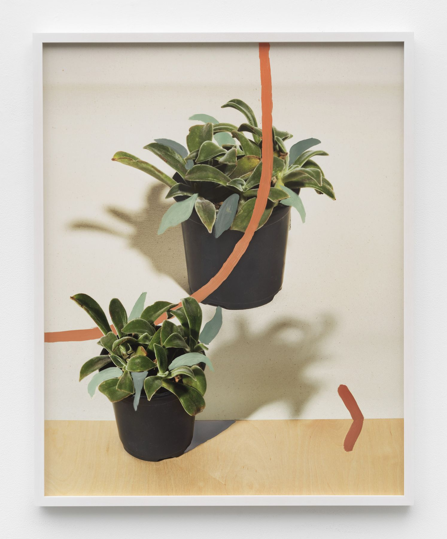 a John Houck print of plants for sale at a gallery in New York