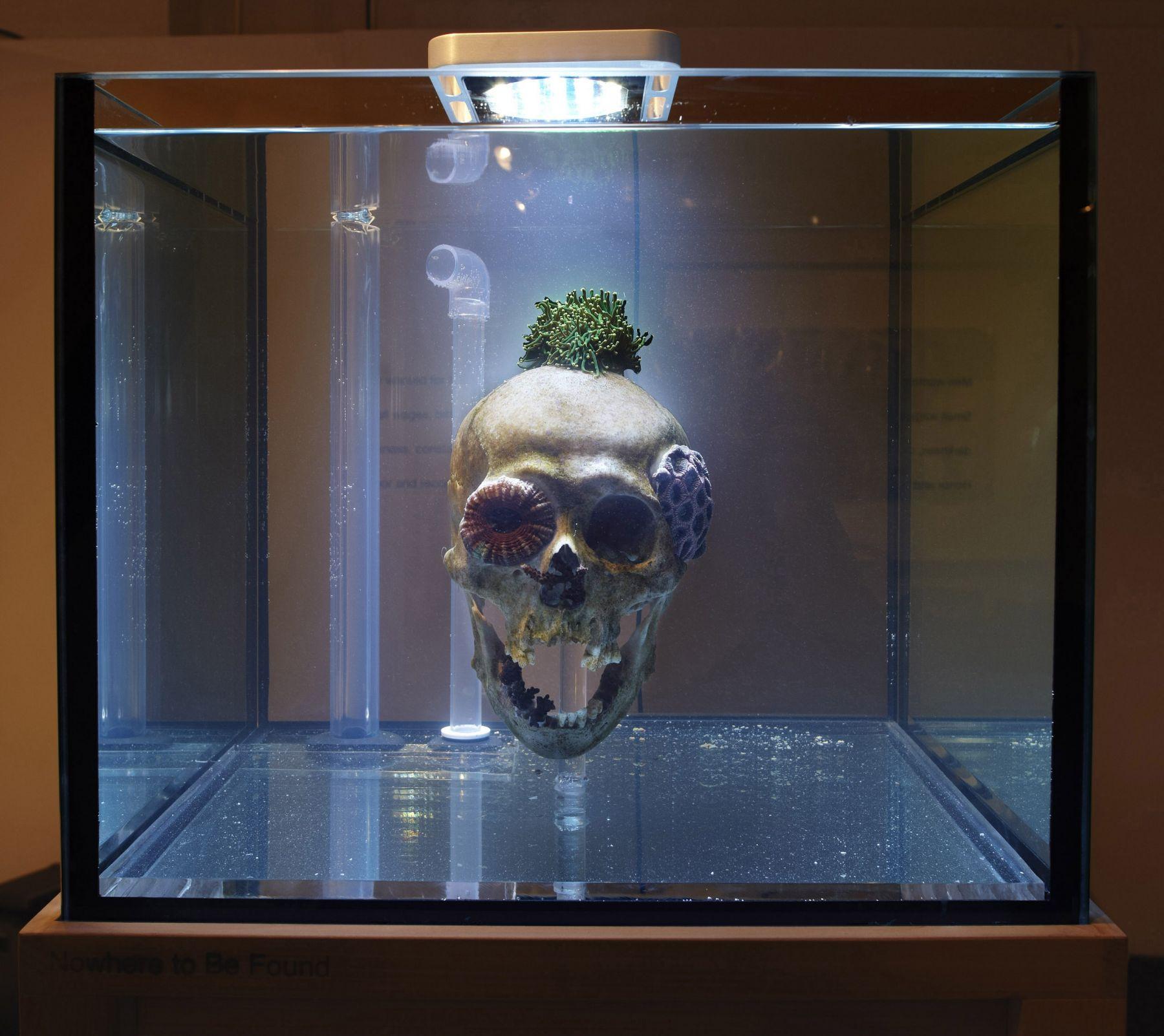 skull in an aquarium tank by mathias kessler