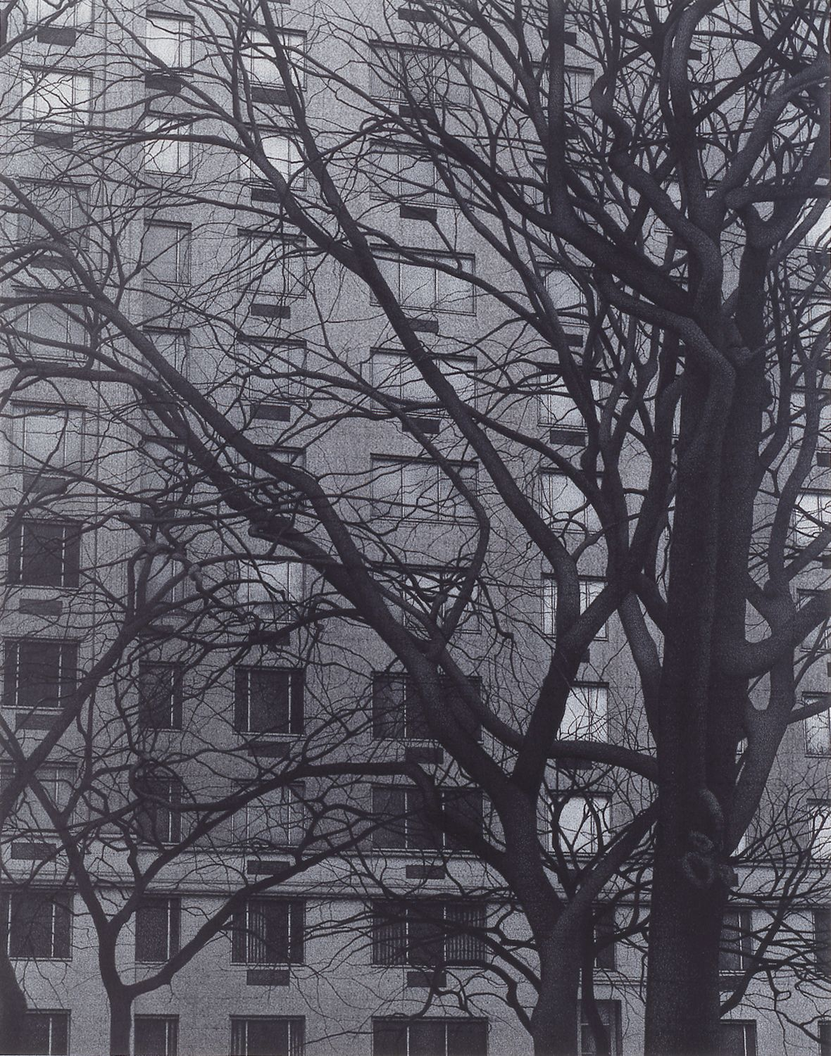 Anthony Mitri Central Park at Fifth Ave, NY, NY, 2006, charcoal on paper, 21 3/4 x 17 inches, Private Collection