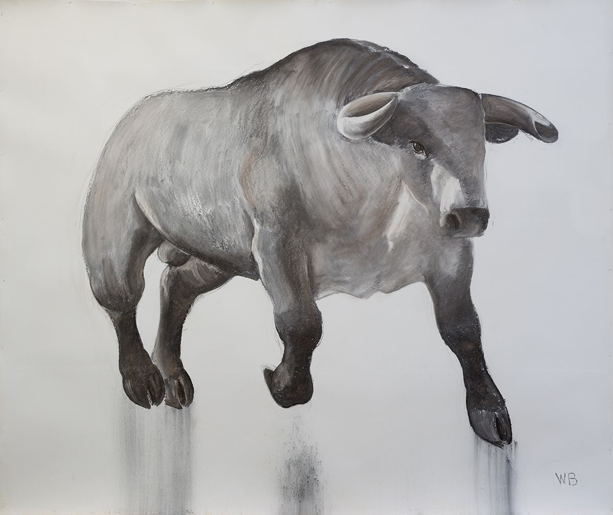 William Beckman, Charging Bull, 2017, charcoal on gessoed paper, 76 x 90 inches