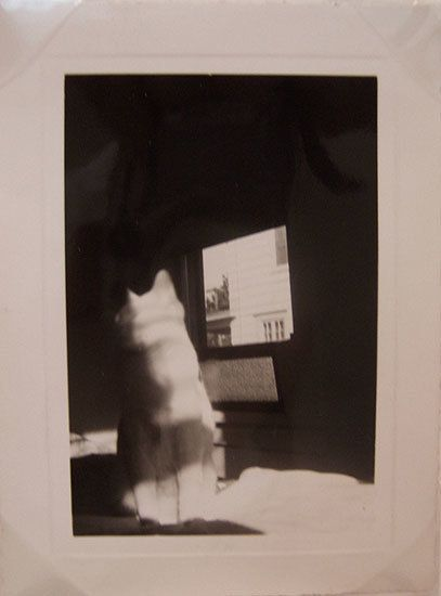 Cat by Window, 1950, 3 2/16 x 4 2/16 in.