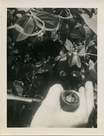 Pipe in Hand, 1950s, 4 x 3 in.