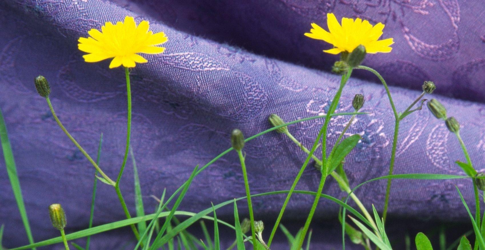 Susan MacWilliam, Garden Series: Dress and Dandelions, 2001/2006, digital print, 16 x 24 inches, ed: 5 + 2AP.