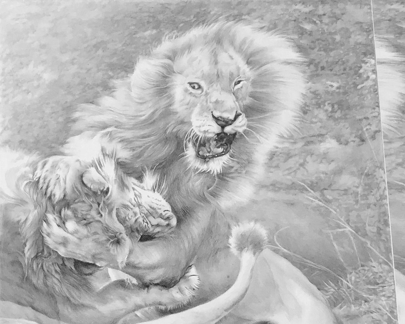 detail view of two lions fighting