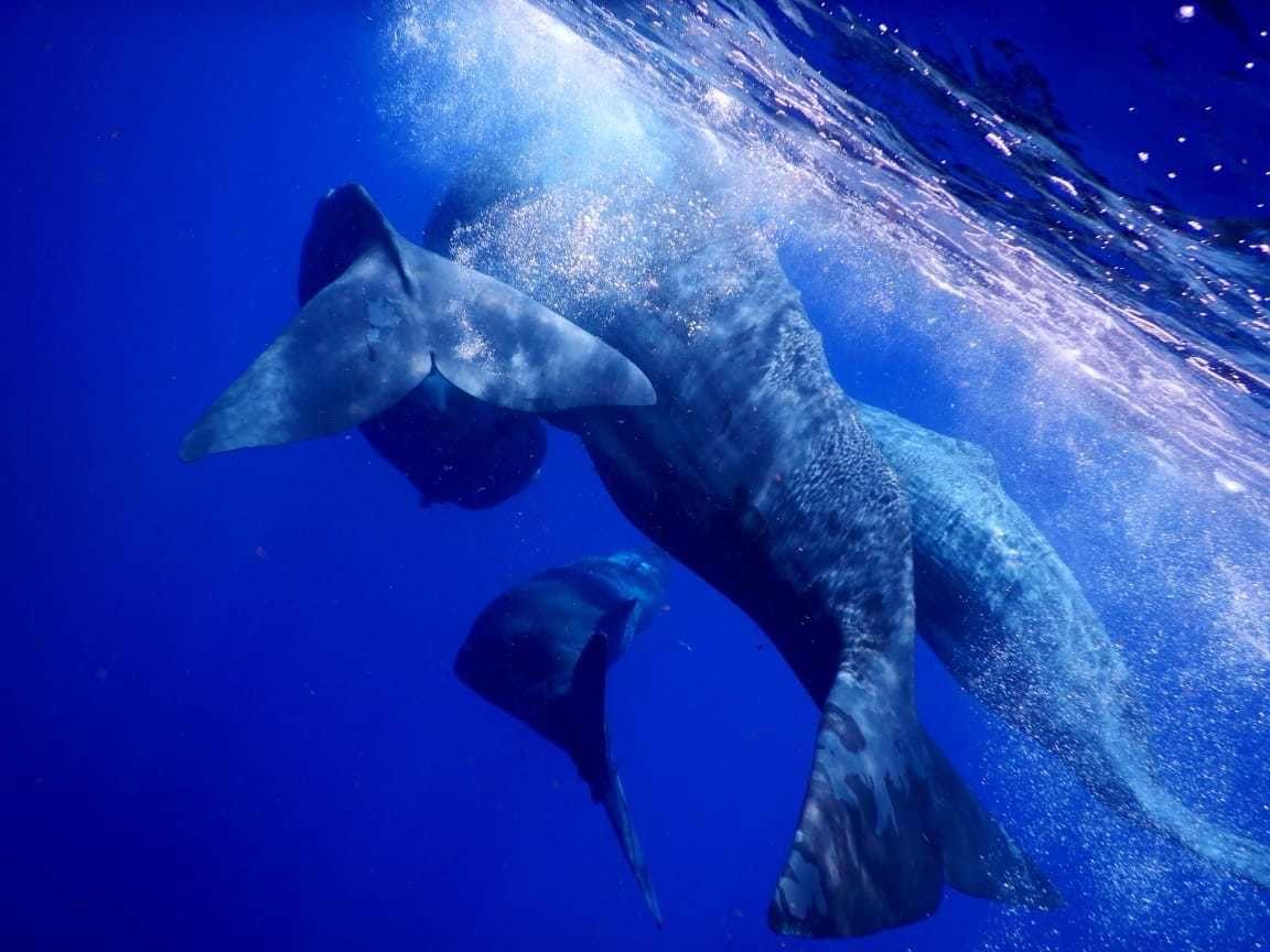 image whales GUEIT