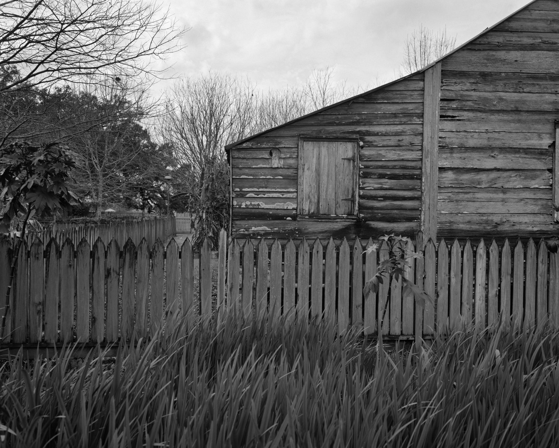 Tall Grass, Fence and Cabin large image