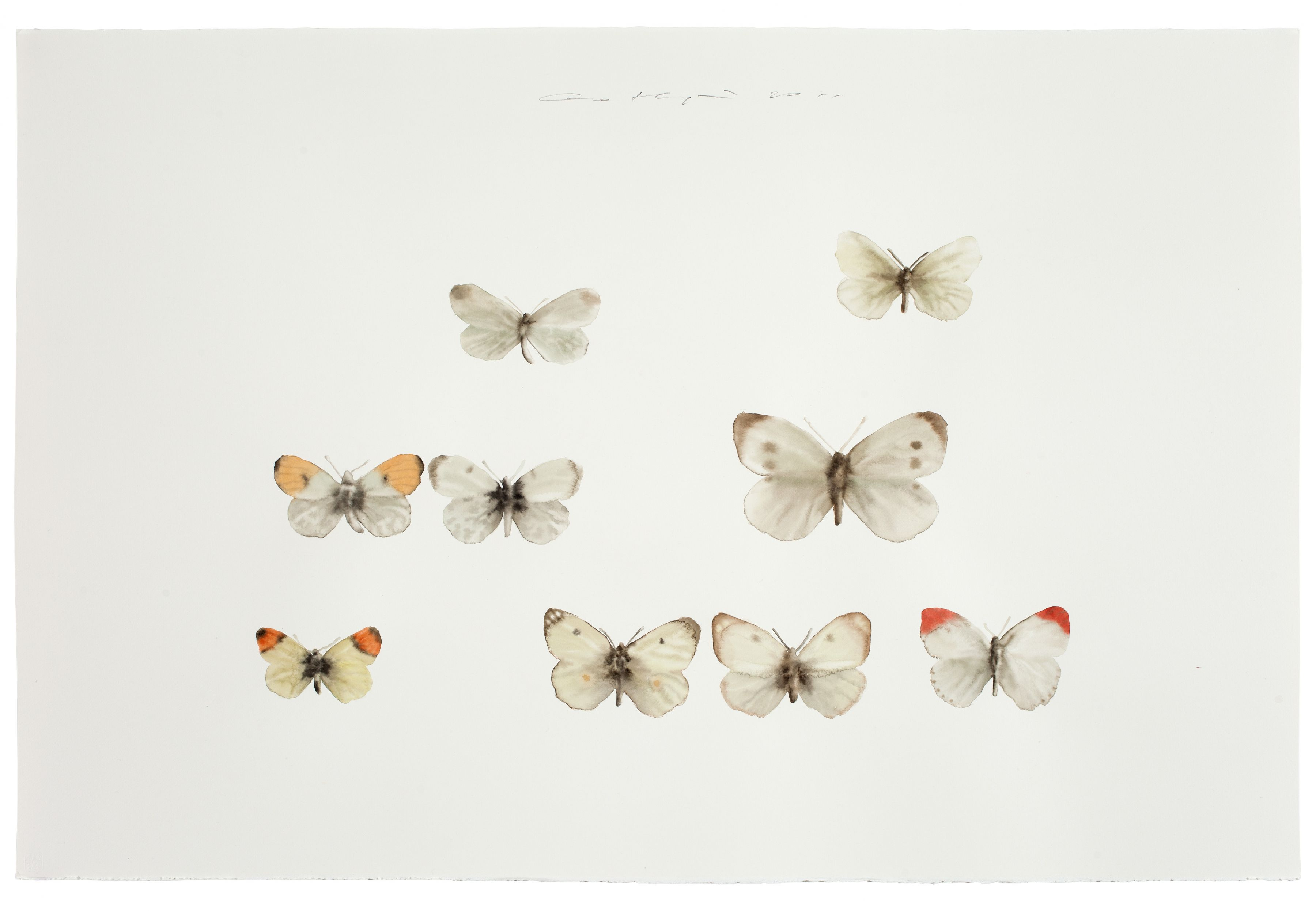 Insect No. 2è™«2, 2011