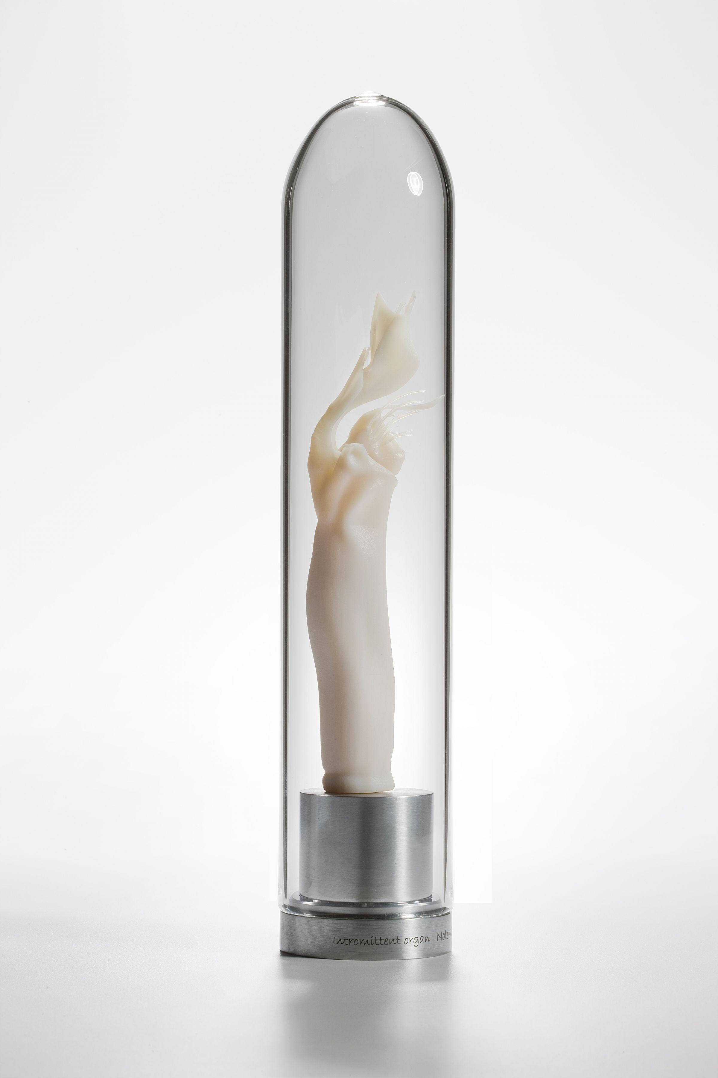 Maria Fernanda Cardoso,Intromittent organ of Thelbunus sp harvestman, 2008-2009,Resin, glass, metal,11 x 2 3/8 x 2 3/8 in. (27.9 x 6 x 6 cm.)