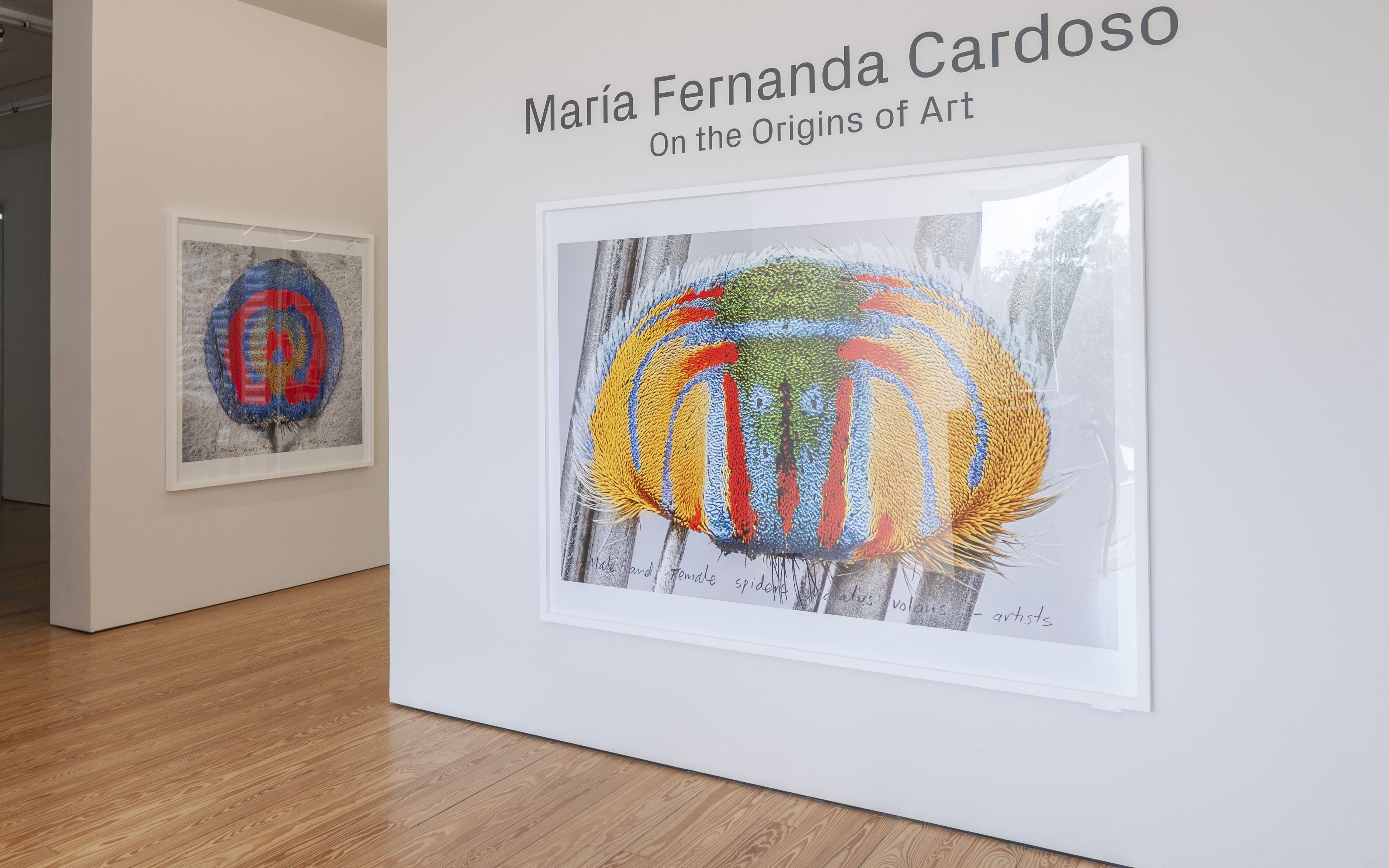 Maria Fernanda Cardoso: On the Origins of Art.
