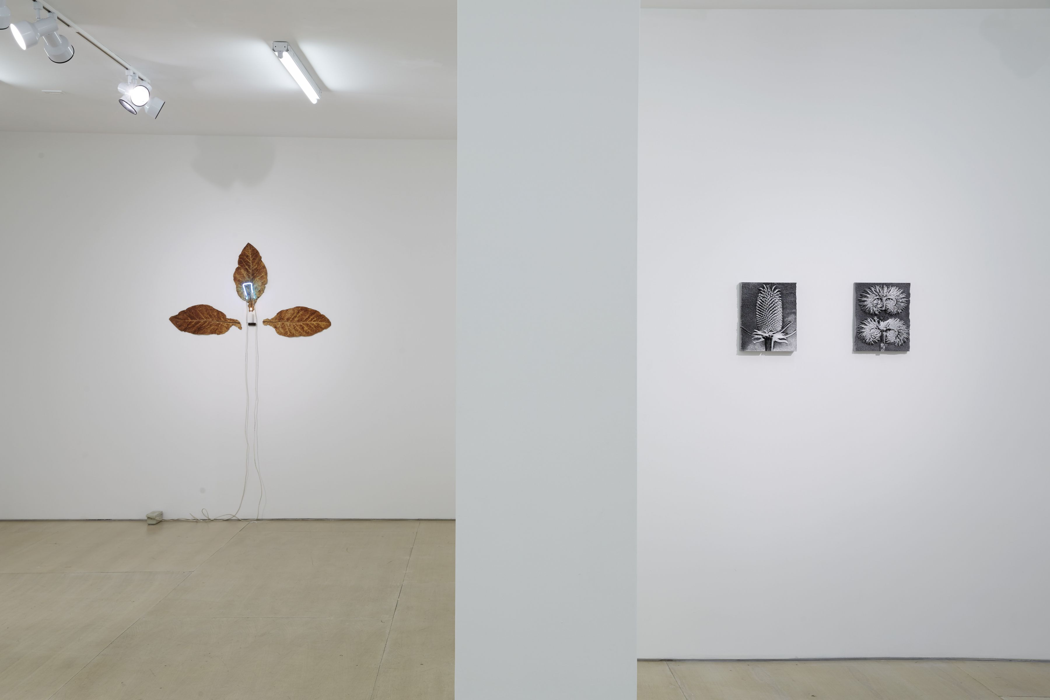 Ordering Nature(Installation View), 20 Clinton Street, 2015