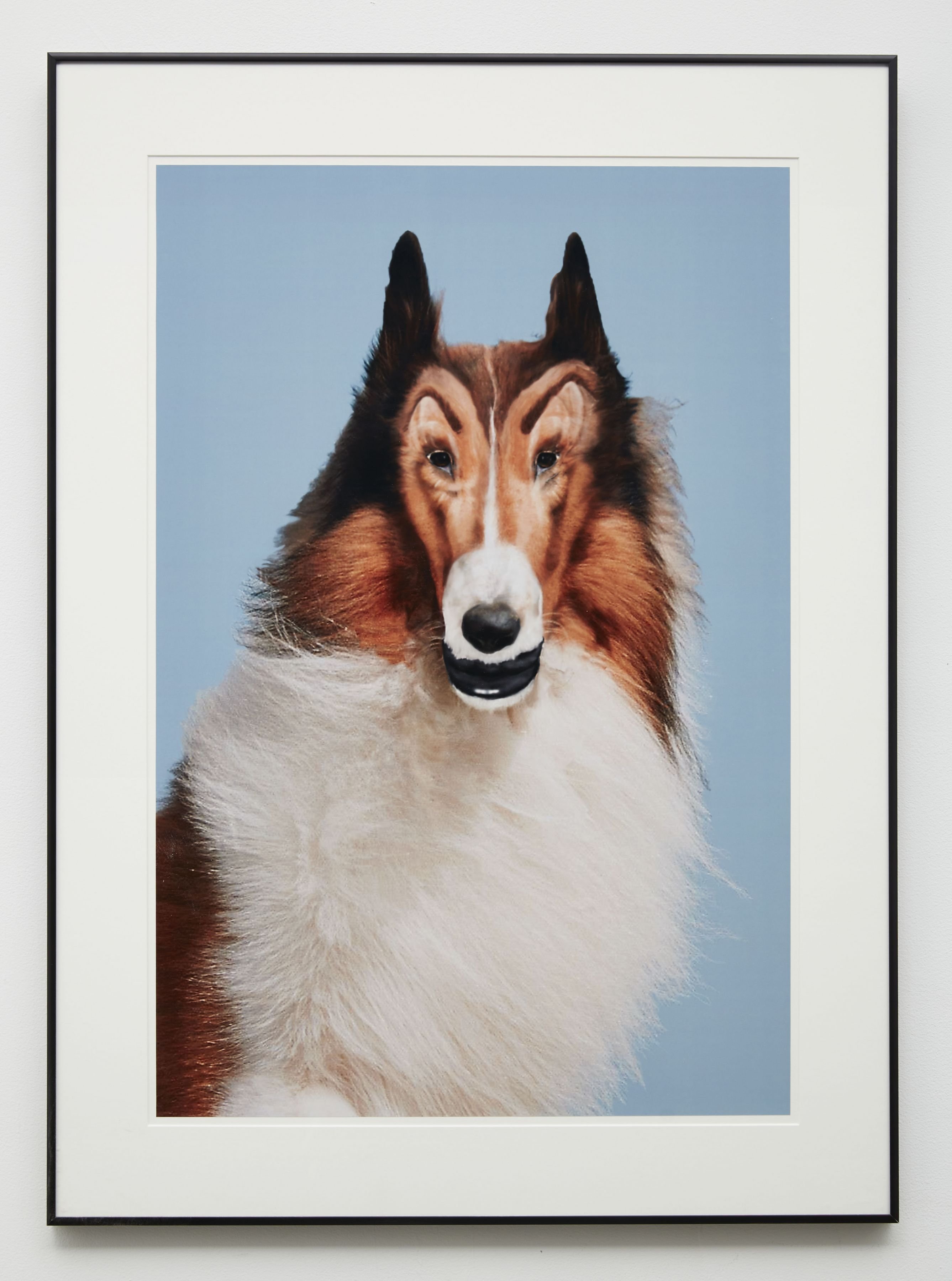 an edited photograph of Lassie created by Baltimore-based artist John Waters