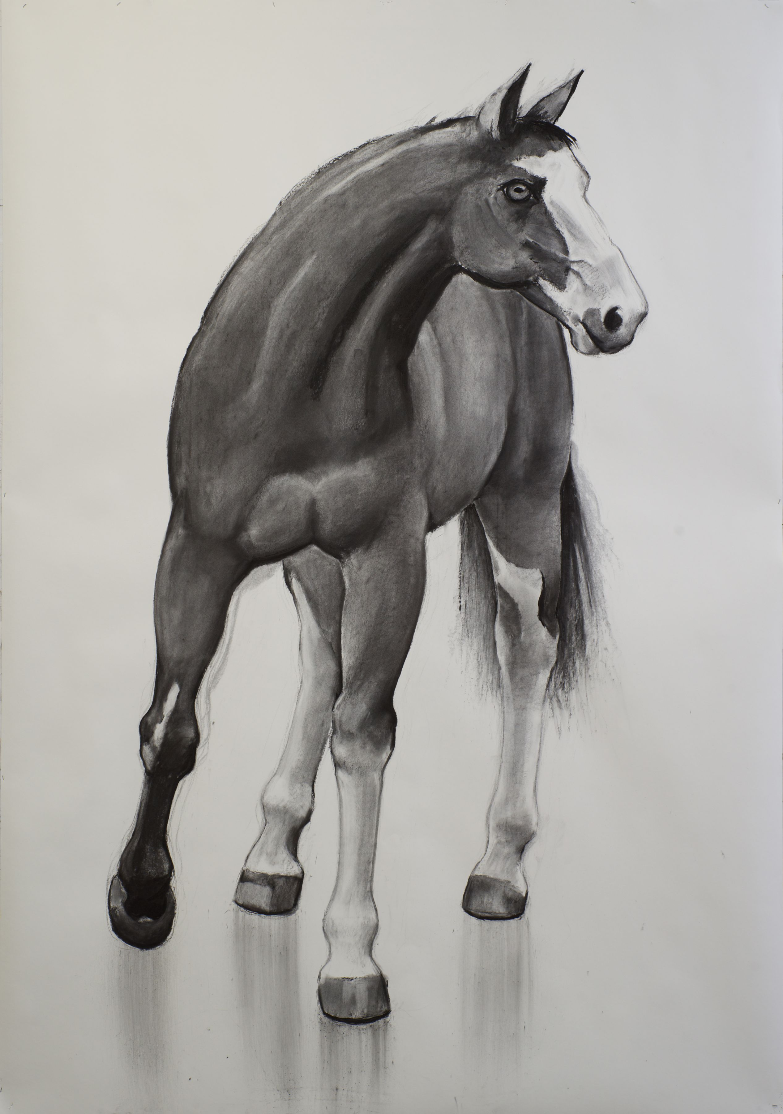 William Beckman, Mask Horse, 2017, charcoal on paper, 103 x 72 inches