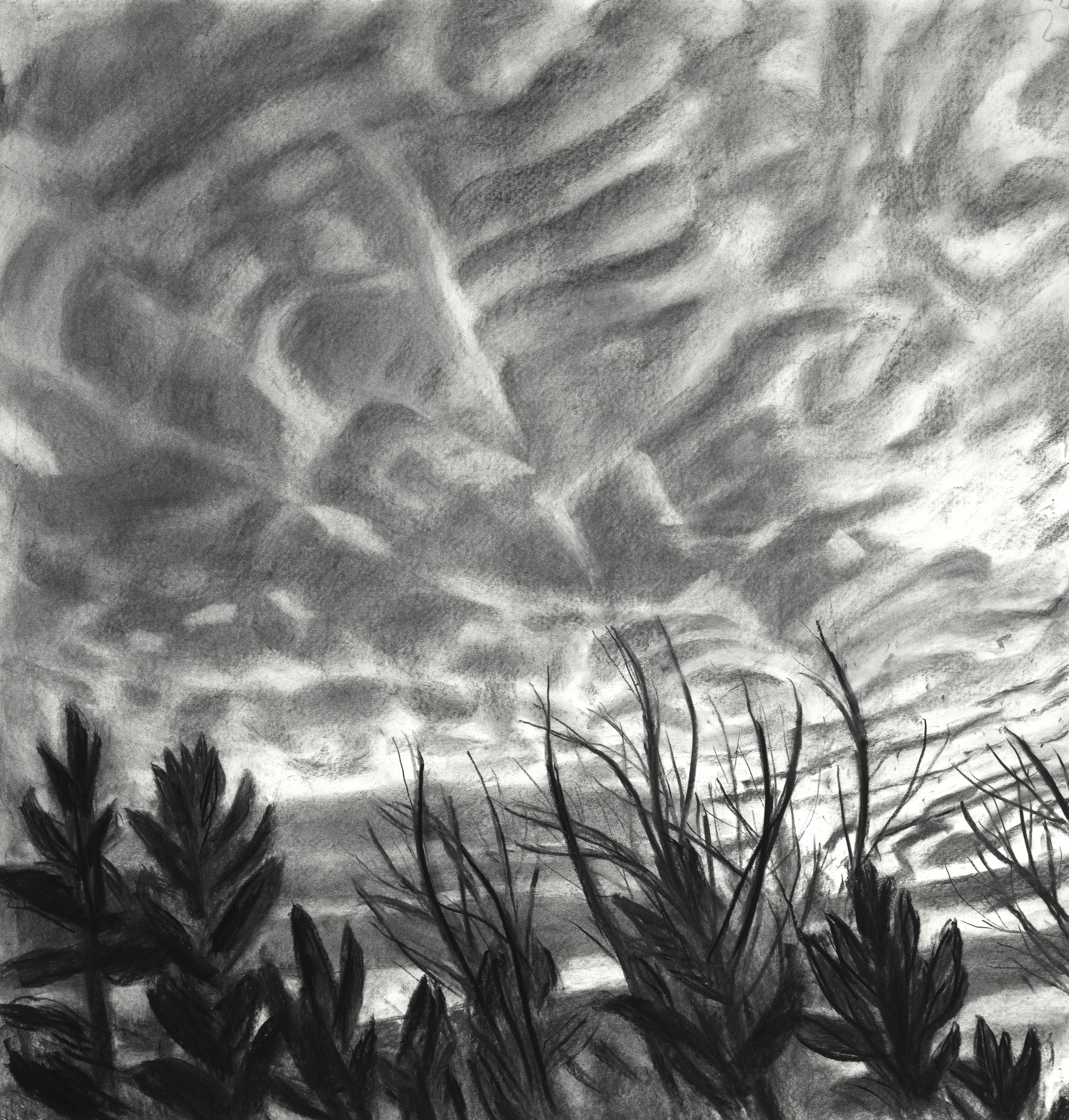 "Mackerel Sky III, 44"" x 42"", Charcoal On Paper"