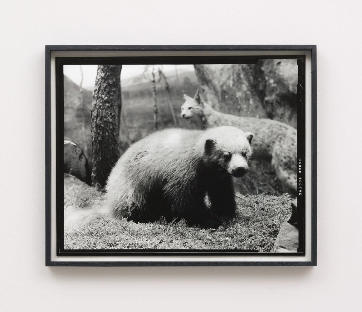 Gerard Byrne Sixteenth Beast