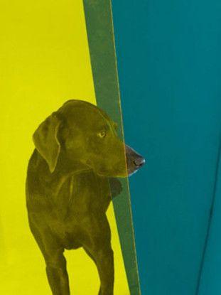 Nosy Blue, 2008