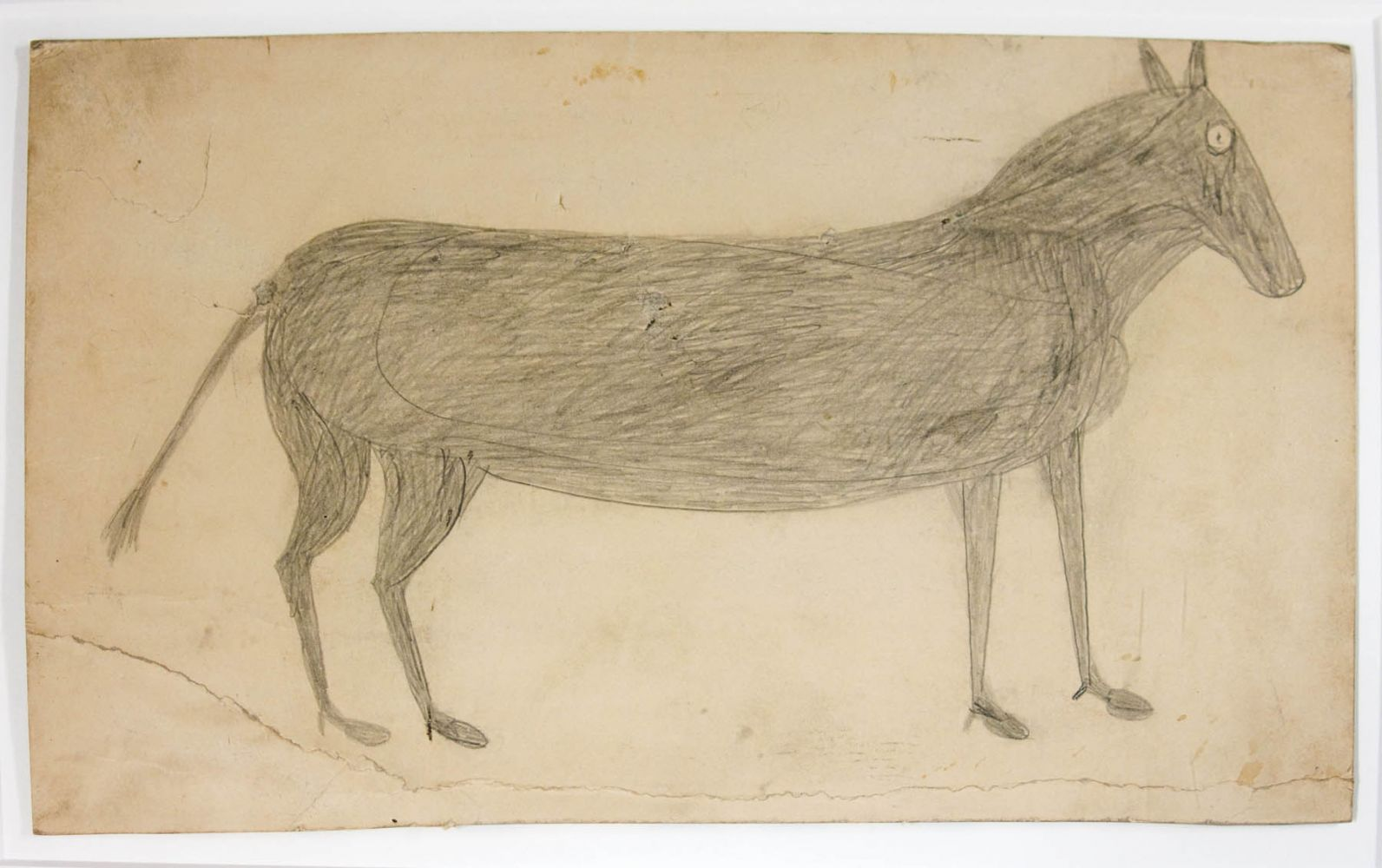 Image of Mule (Early)