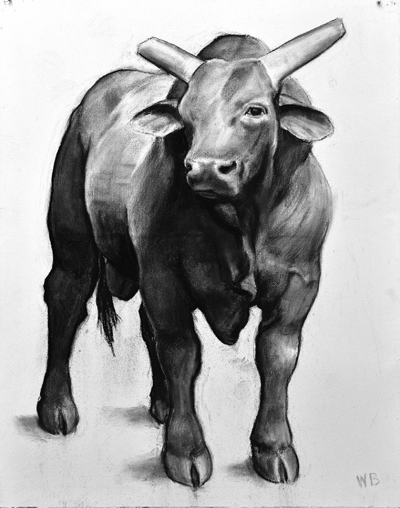 William Beckman, Bull: Wyoming, 2018, charcoal on paper, 51 x 40 inches