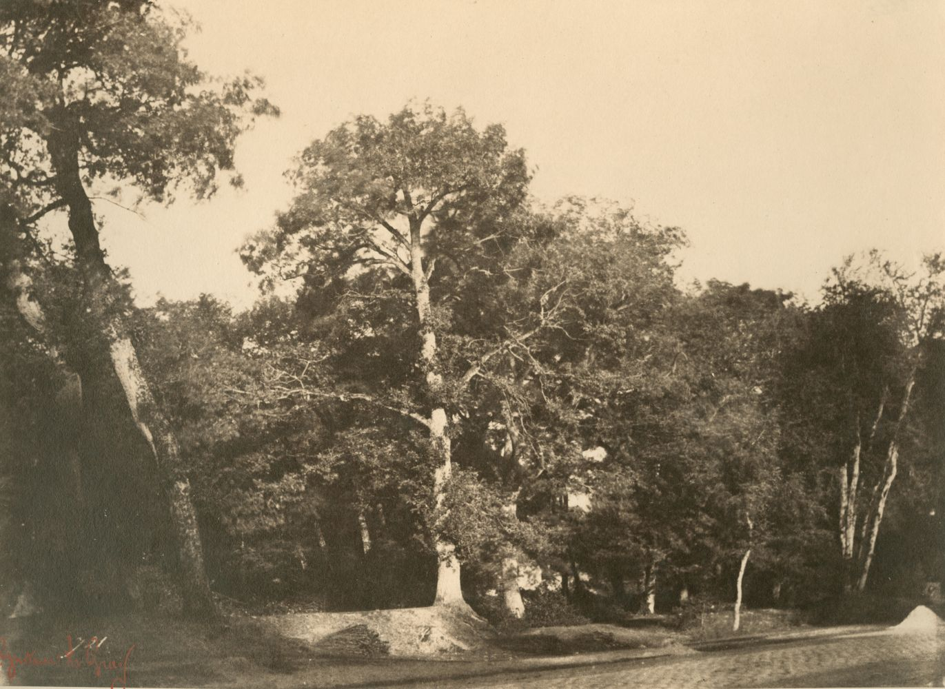 "Gustave LE GRAY (French, 1820-1884) ""Le Hêtre, Fontainebleau""*, early 1850s Albumen or coated salt print from a waxed paper negative 20.0 x 27.2 cm"