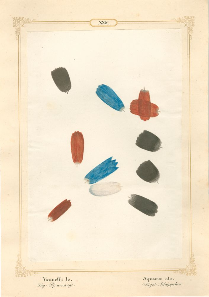 "Ernst HEEGER (Austrian, 1783-1866) ""Vanessa Io. Squamae alae."" Aglais io. (Wing scales of peacock butterfly), 1860 Hand colored salt print from a glass negative 20.1 x 13.6 cm mounted on 26.0 x 18.5 cm sheet  Numbered and titled in Latin and German in ink on mount"