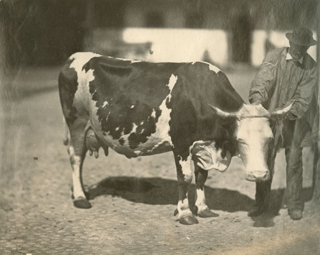 Adolphe BRAUN (French, 1812-1877) Cow and farmer, late 1850s Albumen print from a collodion negative 23.0 x 28.2 cm on 23.9 x 28.2 cm paper
