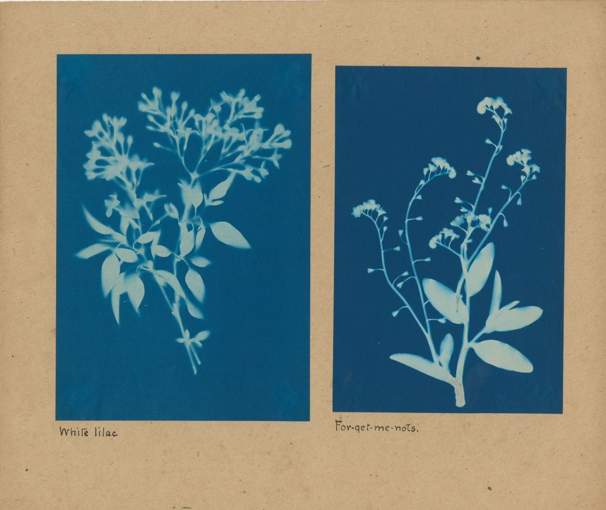 """Bertha E. JAQUES (American, 1863-1941) """"White lilac"""" and """"For-get-me-nots"""", 1905-1915 Two cyanotypes 18.2 x 12.6 cm and 17.2 x 11.5 cm mounted together on 25.5 x 30.5 cm paper Titled in ink on mount. """"C"""" in ink on mount verso."""