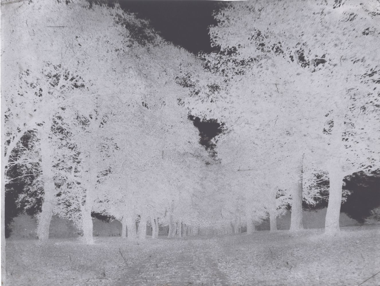 Attributed to Dr. Thomas KEITH (Scottish, 1827-1895) Avenue of trees, Arniston House, 1853-1856 Waxed paper negative 21.4 x 27.5 cm on 21.4 x 27.8 cm paper