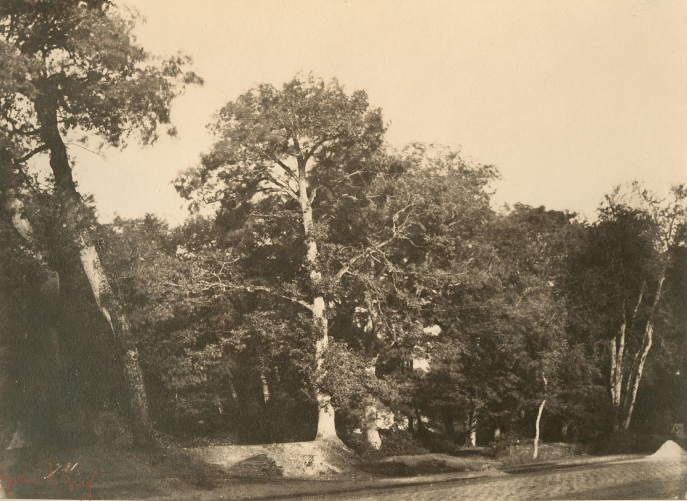 "Gustave LE GRAY (French, 1820-1884) ""Le Hêtre, Fontainebleau""*, early 1850s Albumen or coated salt print from a waxed paper negative 20.0 x 27.2 cm mounted on 41.7 x 56.8 cm paper Numbered ""721"" in the negative. Photographer's red signature stamp. Titled with ""No 721"" in pencil, and ""721"" in ink, with photographer's oval blindstamp on the mount."