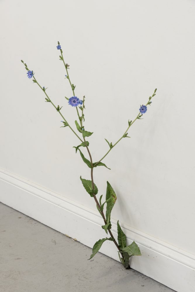 Painted bronze sculpture of a weed with blue petals and green leaves