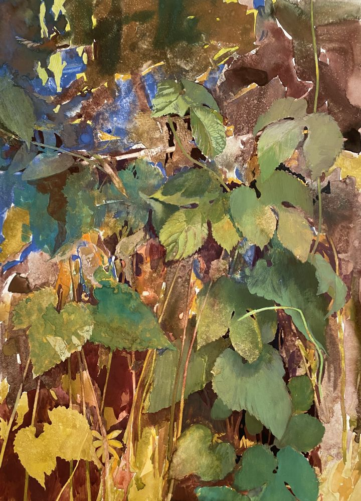 Dale O. Roberts, Overlay Of Hops  19.5″ x 14.5″  Gouache