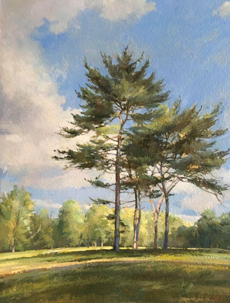 """Pines In A Field 1  15.5"""" x 11""""  Oil On Board"""