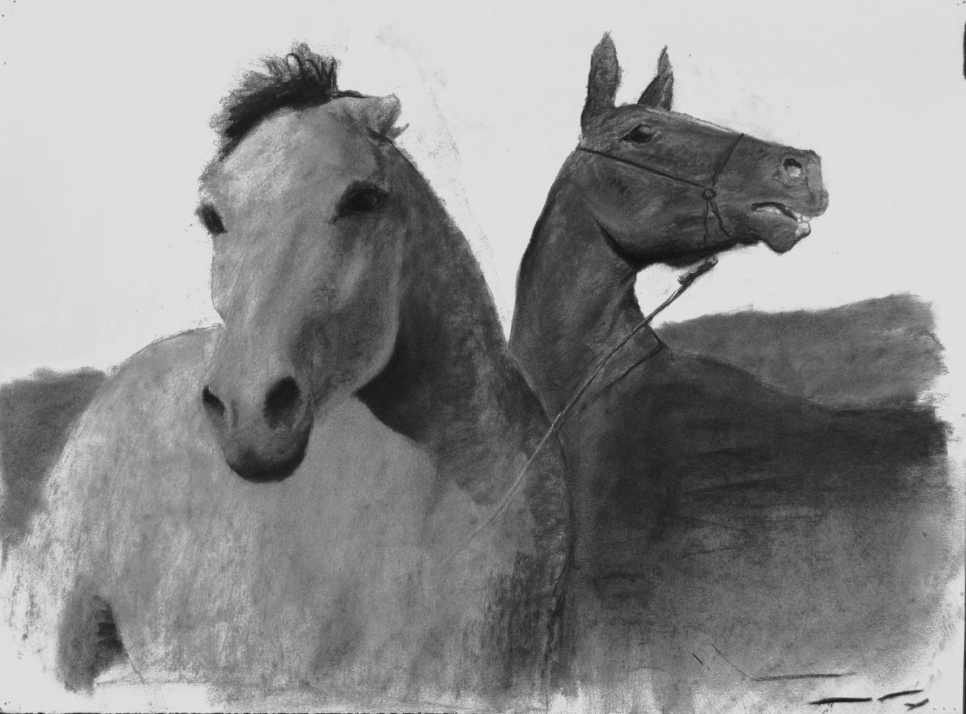 """Ted Walsh, Horses 22"""" x 30""""  Charcoal On Paper"""