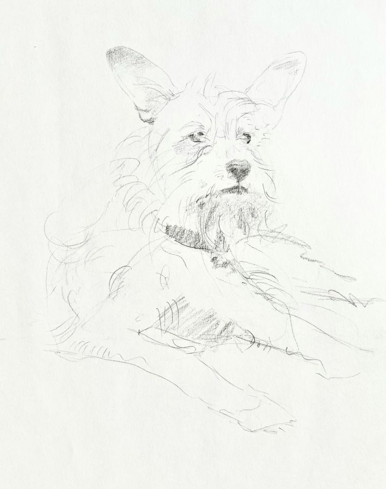 "Sketch 1  11"" x 8""  Graphite On Paper"