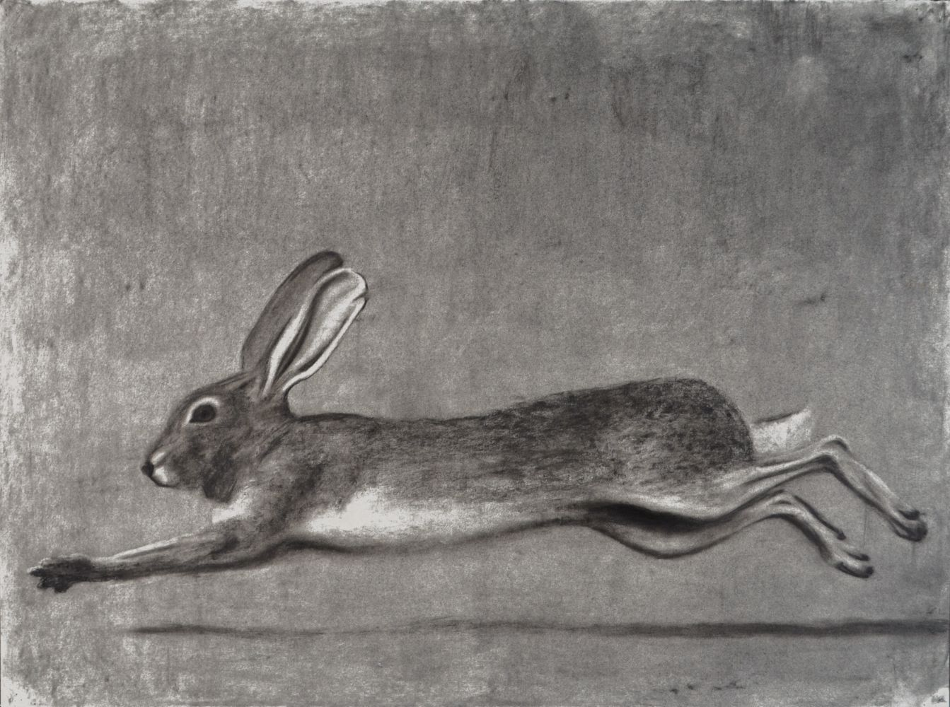 """Ted Walsh, Rabbit 22"""" x 30""""   Charcoal On Paper"""