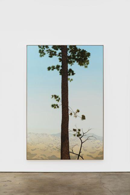 Jake Longstreth In Glendale (Pine 4), 2020 oil on muslin 84 x 57 in (85 x 57.25 in, framed) 213.4 x 144.8 cm (216 x 145.5 cm, framed) (JLO20.006)