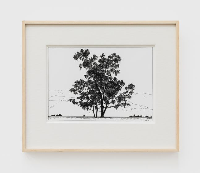 Jake Longstreth, Untitled (Eucalyptus), 2020. Ink on paper, 12 x 14 in (12 ½ x 15 in. framed), 30.5 x 35.6 cm (31.75 x 38 cm, framed) (JLO20.047)