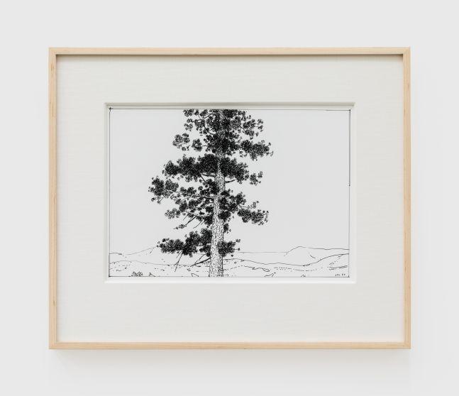 Jake Longstreth, Untitled (Oak), 2020. Ink on paper, 12 x 14 in (12 ½ x 15 in. framed), 30.5 x 35.6 cm (31.75 x 38 cm, framed) (JLO20.052)