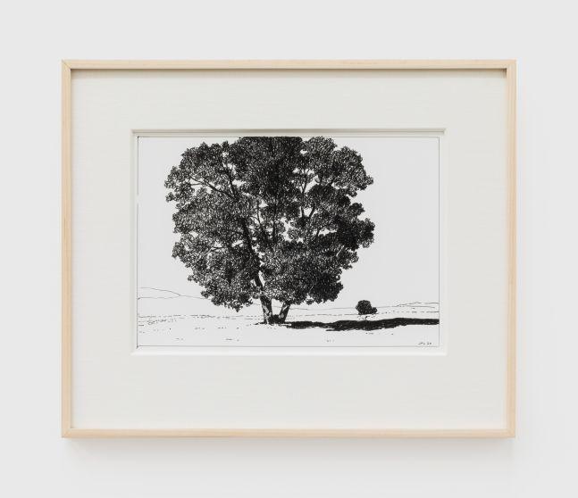 Jake Longstreth, Untitled (Oak), 2020. Ink on paper, 12 x 14 in (12 ½ x 15 in. framed), 30.5 x 35.6 cm (31.75 x 38 cm, framed) (JLO20.051)
