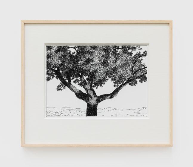 Jake Longstreth, Untitled (Oak), 2020. Ink on paper, 12 x 14 in (12 ½ x 15 in. framed), 30.5 x 35.6 cm (31.75 x 38 cm, framed) (JLO20.050)