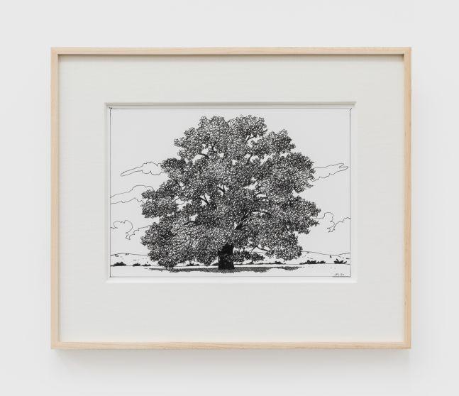 Jake Longstreth, Untitled (Oak), 2020. Ink on paper, 12 x 14 in (12 ½ x 15 in. framed), 30.5 x 35.6 cm (31.75 x 38 cm, framed) (JLO20.049)