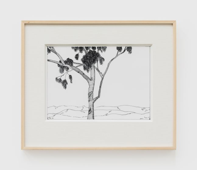 Jake Longstreth, Untitled (Eucalyptus), 2020. Ink on paper, 12 x 14 in (12 ½ x 15 in. framed), 30.5 x 35.6 cm (31.75 x 38 cm, framed) (JLO20.048)