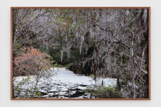 Catherine Opie - Swamps