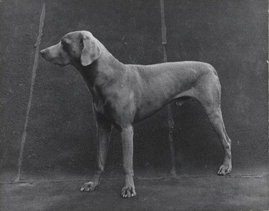Three Legged Dog, 1976