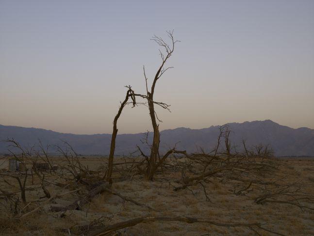 Dead Trees, Anza Borrego Desert, California, 2008