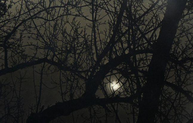 Dark Trees, 1963  Silver gelatin print 9 1/2 x 14 inches