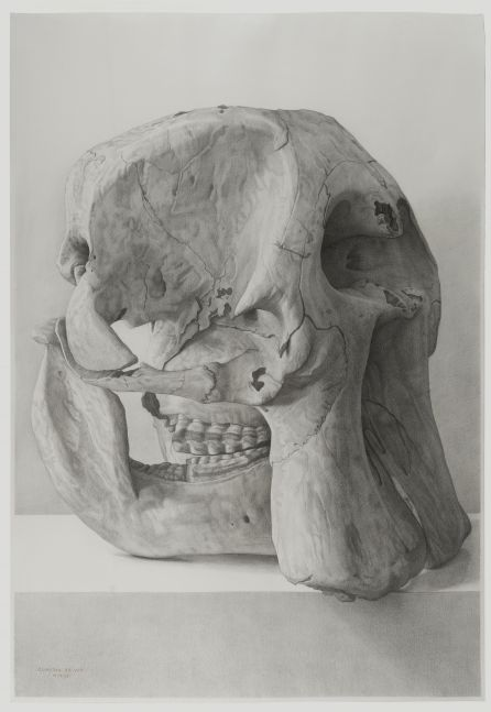 Claudio Bravo, Elephant Skull, 2006, pencil on paper, 43 1/4 x 29 1/2 inches
