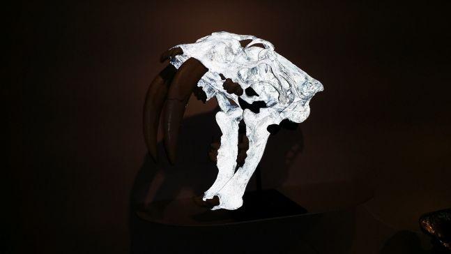 Semi-Feral Skull II