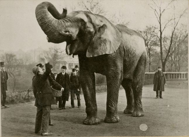 """Edward Bierstadt (American, 1824-1906) """"Jumbo"""", 1882 Artotype, cabinet card 9.7 x 13.4 cm mounted on 10.5 x 14.7 cm card Printed title on mount. Printed credits """"Artotype / E. Bierstadt / 58 & 60 Reade St. / New York / This picture is printed in permanent ink, and will never fade"""" on mount verso."""