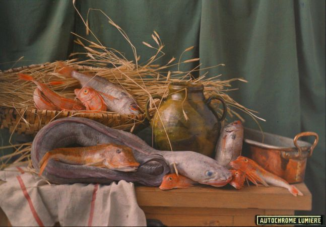 "LUMIÈRE BROTHERS STUDIO (French) Still life with fish, circa 1907 Autochrome 13.9 x 17.9 cm ""Autochromes Lumière"" printed label"